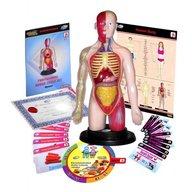 Miniland - Kit educational mulaj Corpul uman si sistemul digestiv