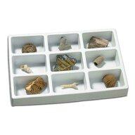 Educational Insights - Kit paleontologie - Fosile