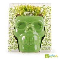 Ghiveci in forma de cap de craniu, 9 cm - verde