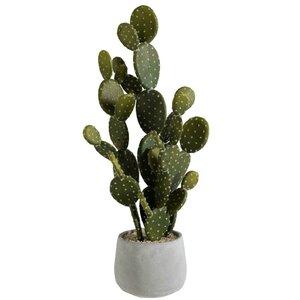 Dana Ghiveci cu Cactus, Ciment, Gri