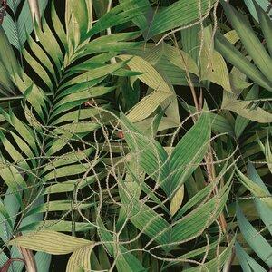 Exotic Garden Set 3 role tapet, Netesut, Verde