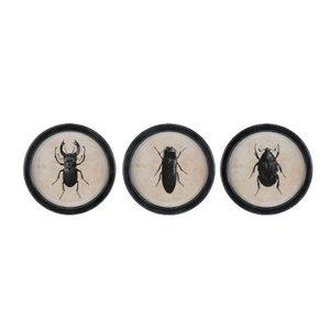 Insects Set 3 decoratiuni perete, Lemn, Negru