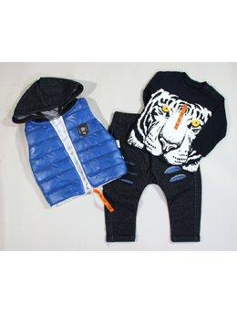 Compleu tigru albastru