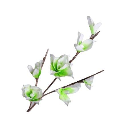 Crenguta de magnolie
