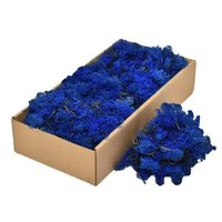 Licheni decorativi Cladonia albastru
