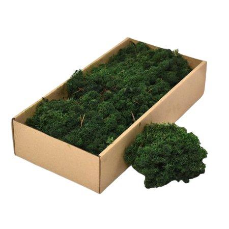 Licheni decorativi Cladonia verde inchis
