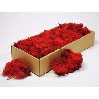 Licheni decorativi rosii