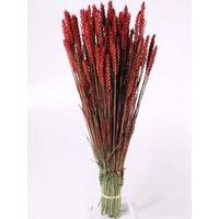 Spice grau rosu inchis vopsite