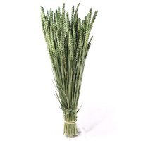 Spice grau verde inchis vopsite