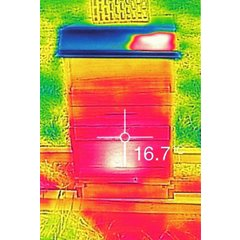 BeeWatch Thermo